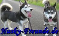 www.husky-freunde.de