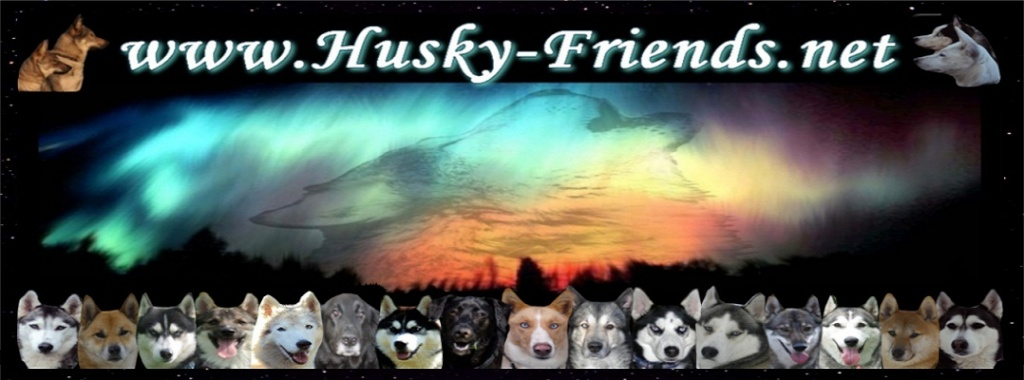 Husky-Friends das Husky Forum