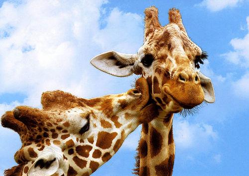 Animal Love Pics Animal14