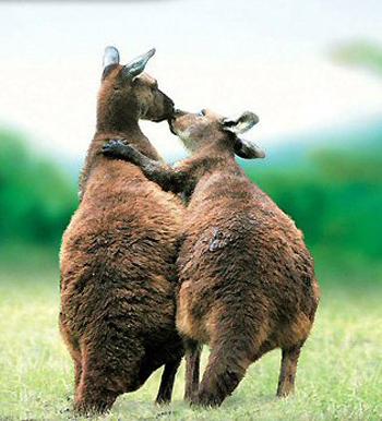 Animal Love Pics Animal16