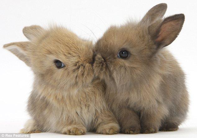 Animal Love Pics Bunnie10