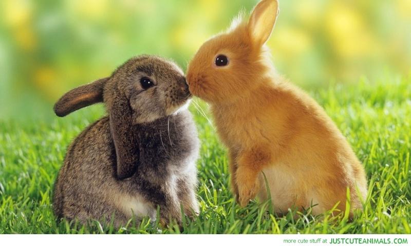 Animal Love Pics Cute-b10