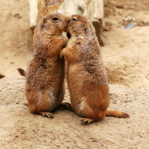 Animal Love Pics Kissin11