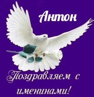 АНТОН 12627513