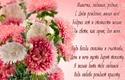 С Днём Рожденья МАМА Mama0039