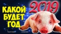 2019 ГОД-ЖЁЛТОЙ ЗЕМЛЯНОЙ СВИНЬИ Maxres43