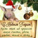 2019 ГОД-ЖЁЛТОЙ ЗЕМЛЯНОЙ СВИНЬИ Newyea16