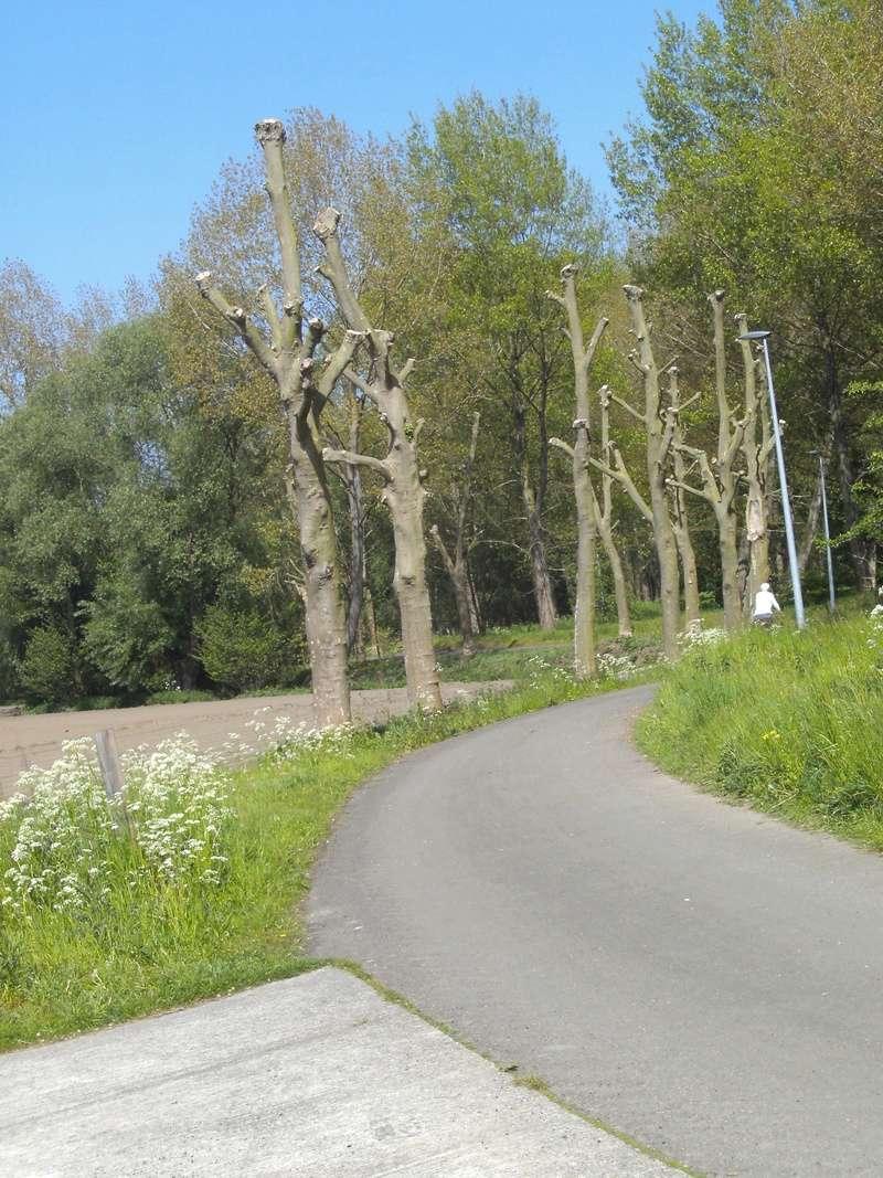 L054 Sint-Niklaas - Mechelen (L54) ('fiets-o-strade' 4) Fietssnelweg F18 Pict6121