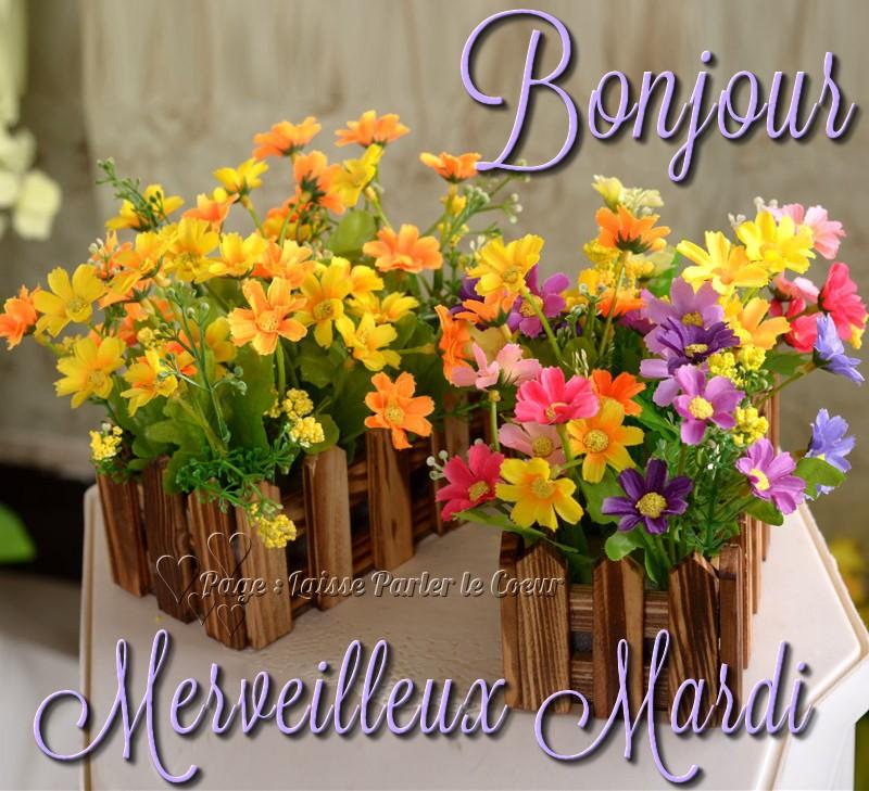 Bonjour du jour et bonsoir du soir - Page 3 Mardi_16