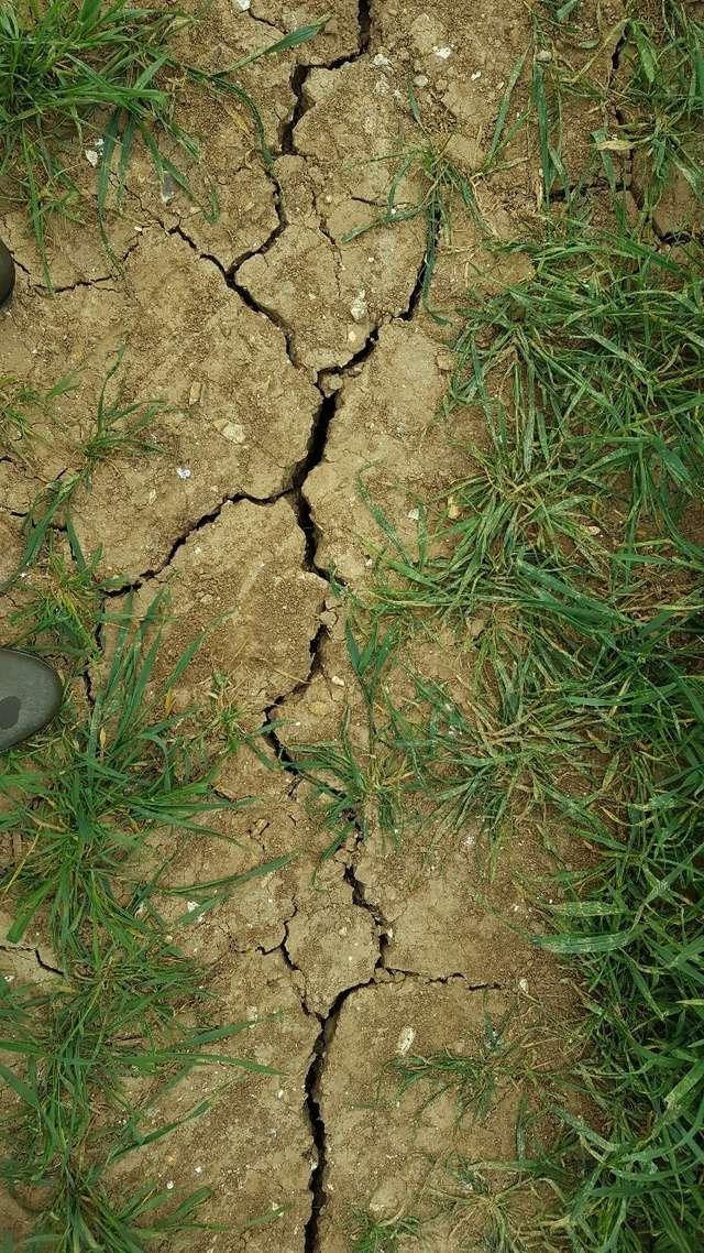suivi des blés tendre 2017 - Page 4 Ist_1710