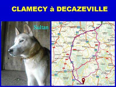 SULTAN, CLT x Husky (9 ans)  (m) vivait dans un placar, ASSO12  ADOPTE 10014510