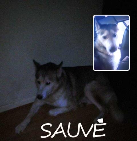 SULTAN, CLT x Husky (9 ans)  (m) vivait dans un placar, ASSO12  ADOPTE 14550810