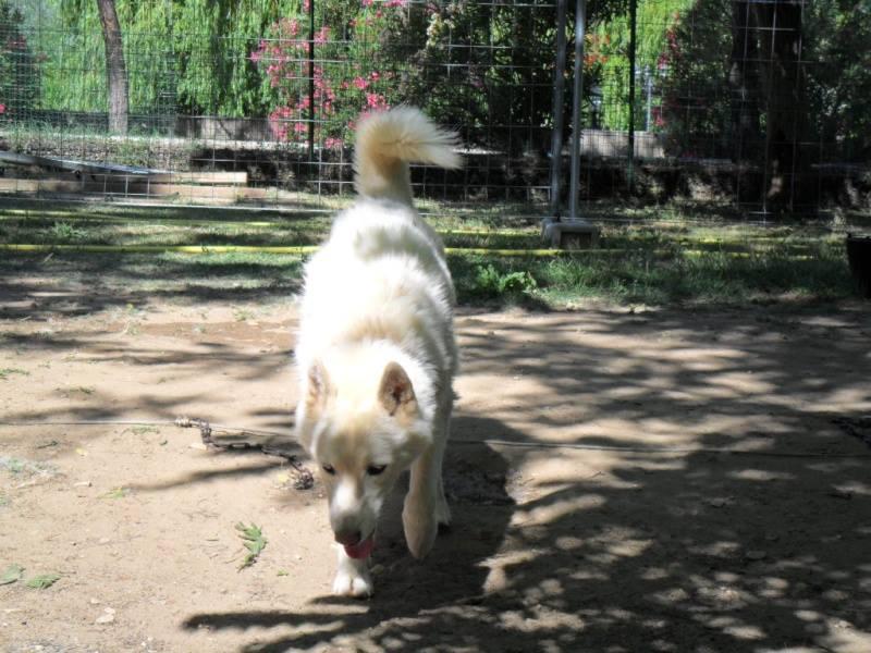 Orca, Husky, âgée de 14 ans née 20 Décembre 2000,  Eden Valley  ASSO39 - Page 3 15070110
