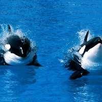 PETITION Deux orques sauvages ont été capturés par des chasseurs russes 2153810