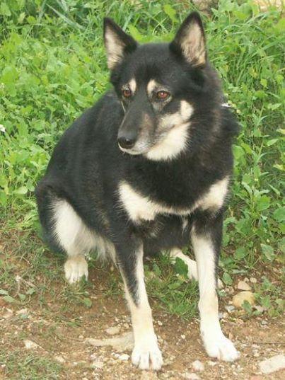 ULLA X Husky née en janvier 2001( f ) adoption uniquement REFU83  25291010