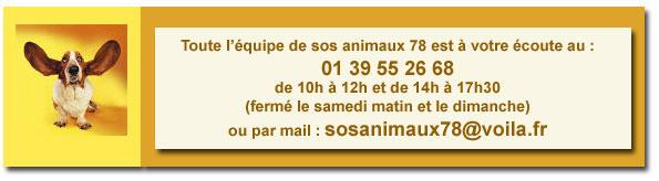 TYSON x husky  labrador né 11/2012/ sociable joueur équilibré  REF78 ADOPTER - Page 2 Contac10