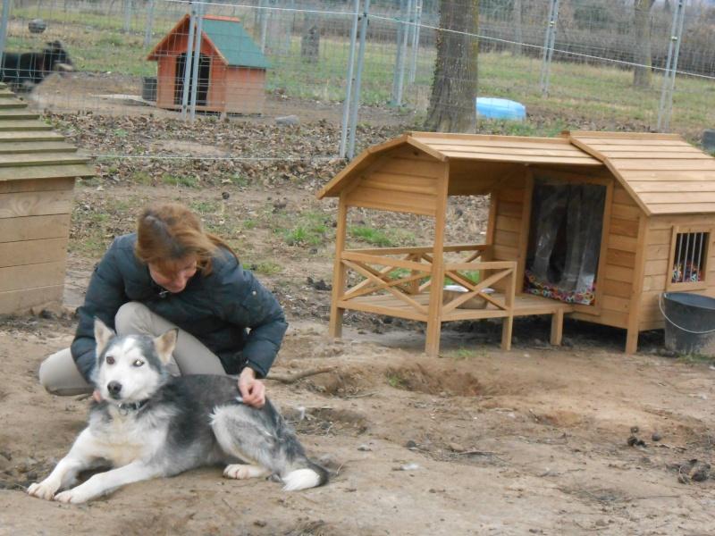 BLUE EYES  8ans, Husky sauvé de Roumanie ASSO65 Valeri10