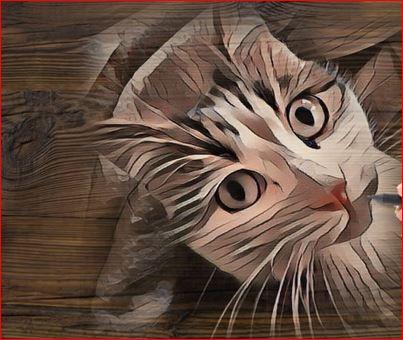 Photo de vos chats gravé dans le bois Captur12