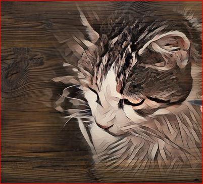 Photo de vos chats gravé dans le bois Titi_b10