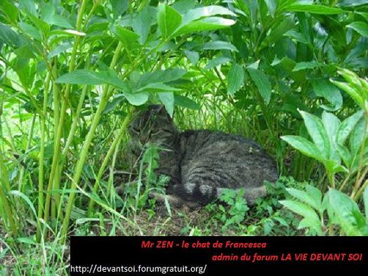 Messages du Peuple Animal : Esprit-Guide Chat_d10