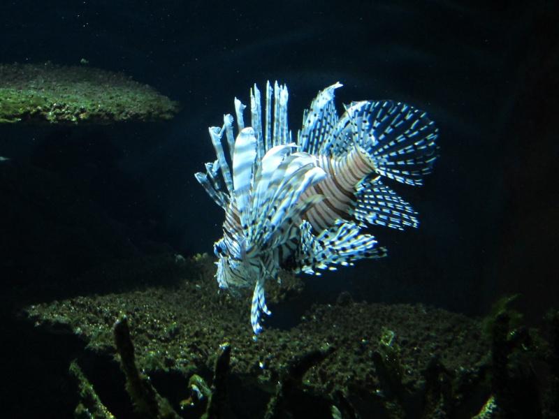 l'aquarium de berlin Img_0811