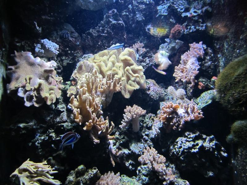 l'aquarium de berlin Img_0815