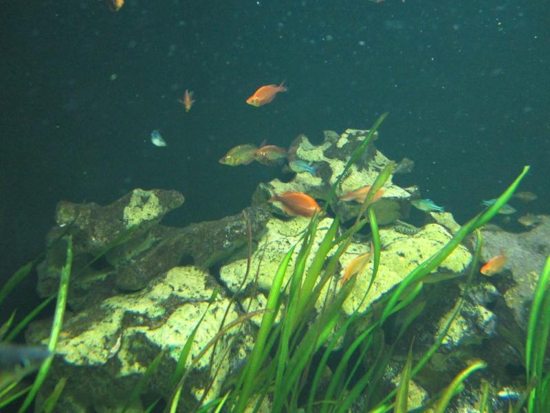 l'aquarium de berlin Img_0819