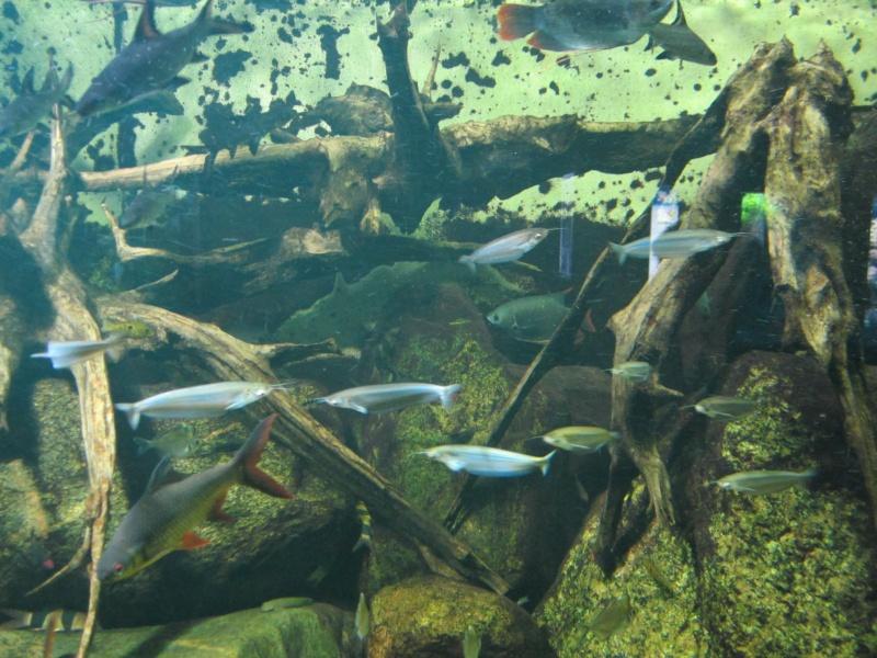 l'aquarium de berlin Img_0820