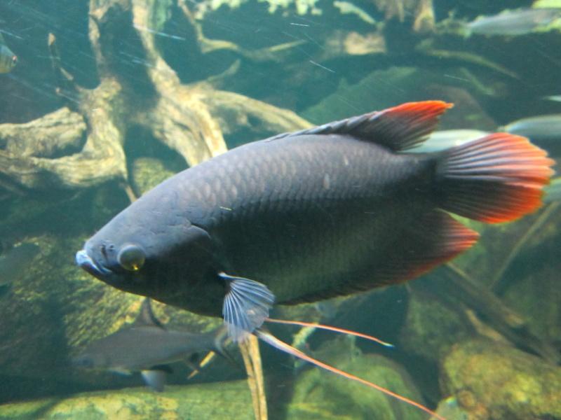 l'aquarium de berlin Img_0821
