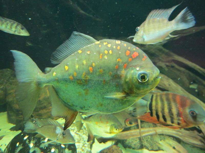 l'aquarium de berlin Img_0823