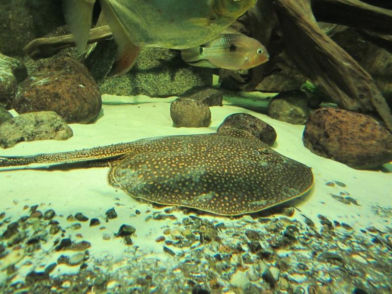 l'aquarium de berlin Img_0824