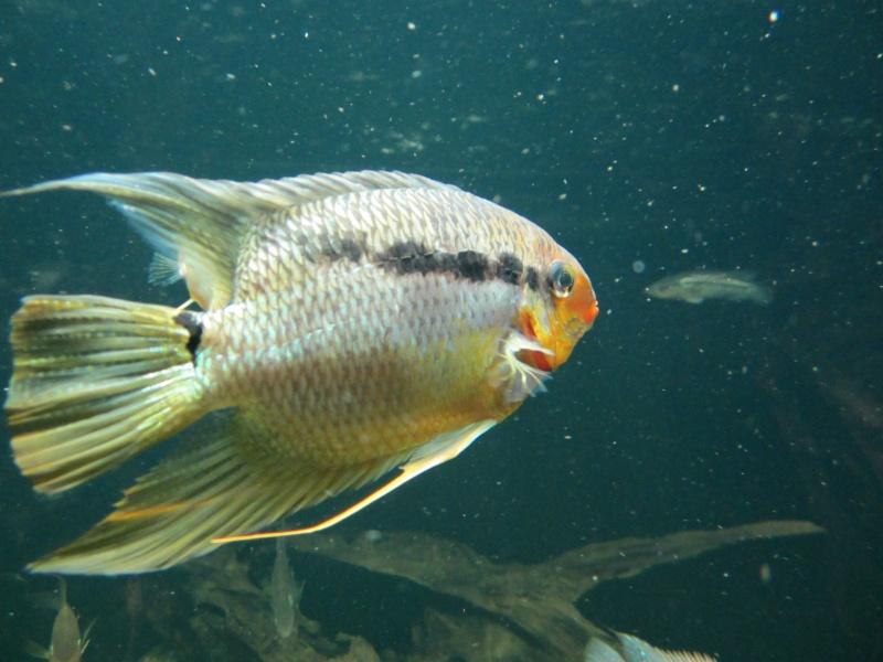 l'aquarium de berlin Img_0825