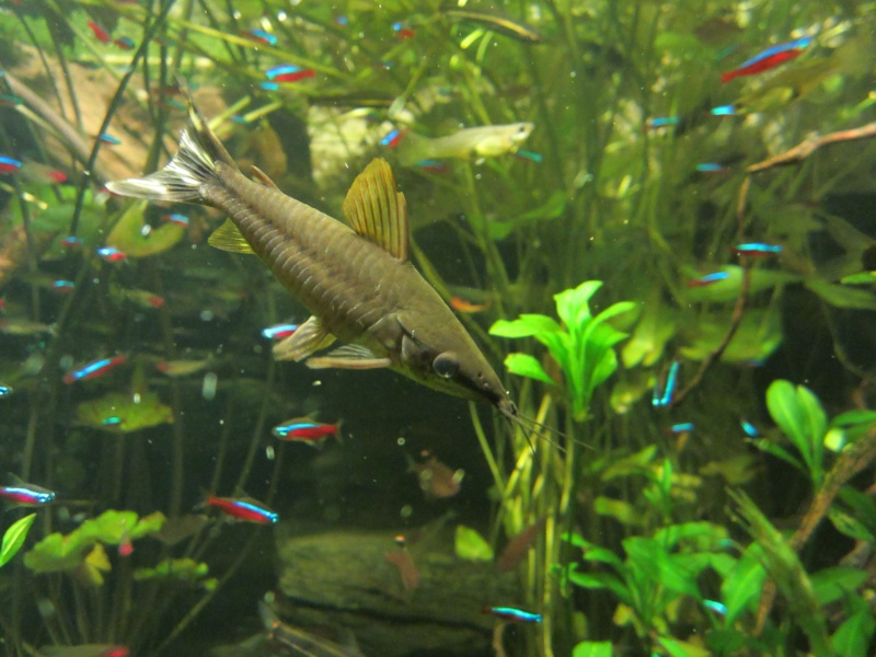 l'aquarium de berlin Img_0827