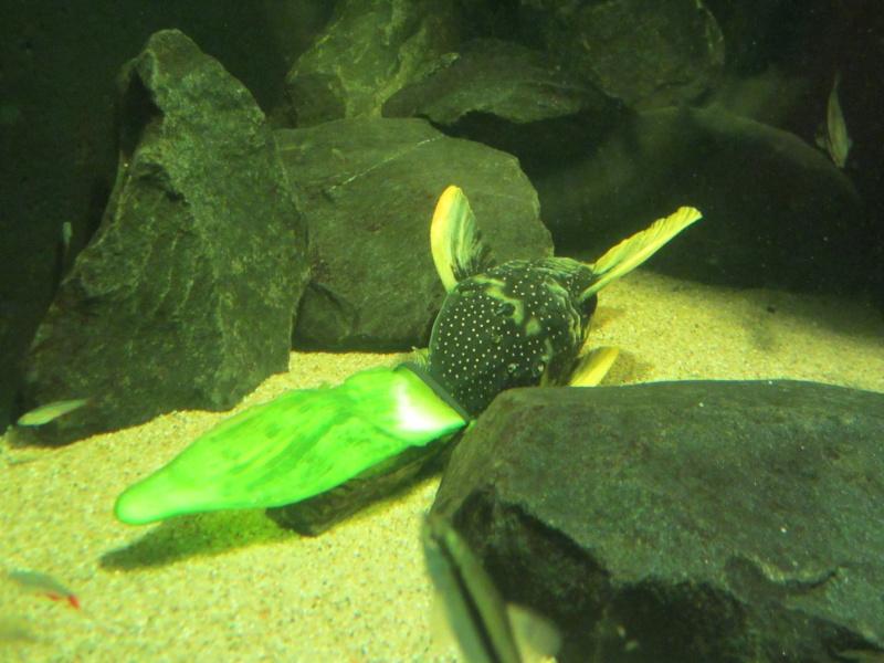 l'aquarium de berlin Img_0828