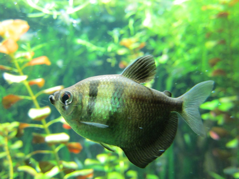 l'aquarium de berlin Img_0829
