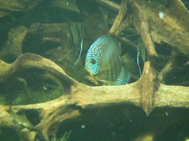 l'aquarium de berlin Img_0831