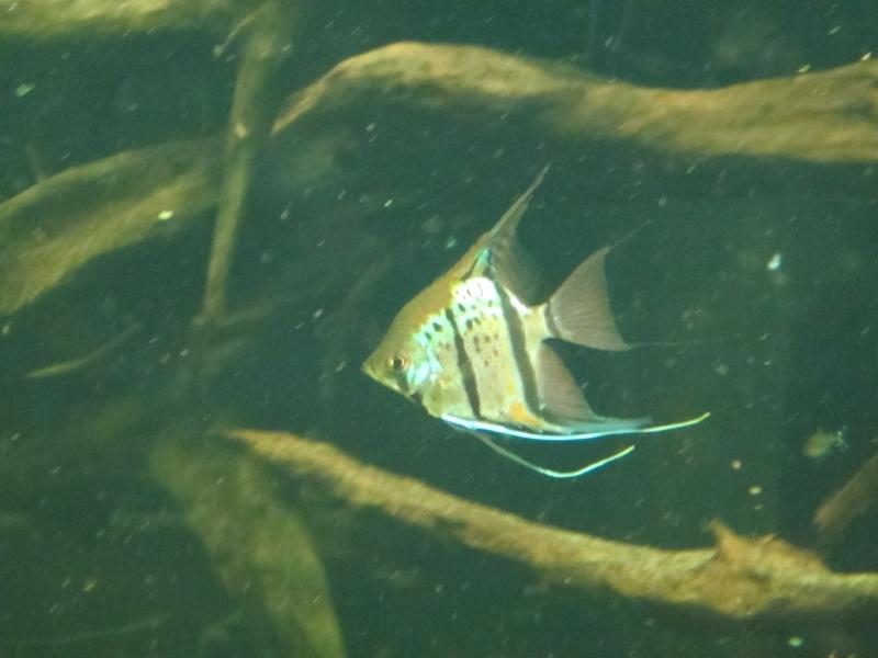 l'aquarium de berlin Img_0832
