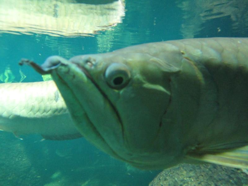 l'aquarium de berlin Img_0834