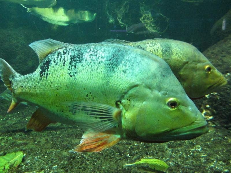 l'aquarium de berlin Img_0835