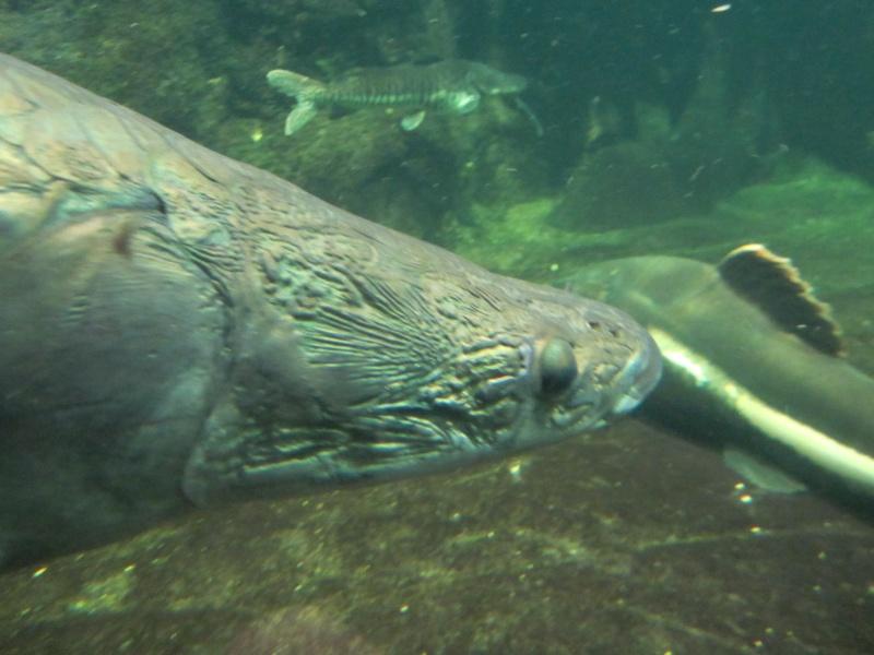 l'aquarium de berlin Img_0836