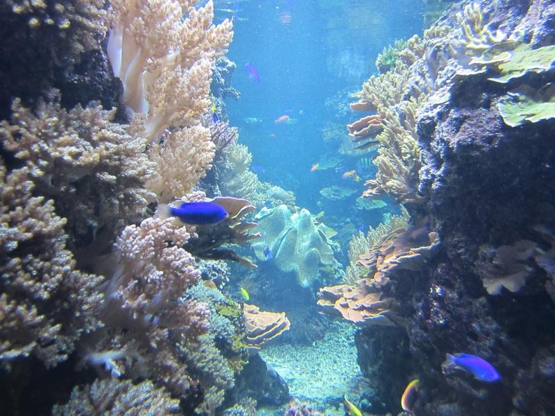 l'aquarium de berlin Img_0910