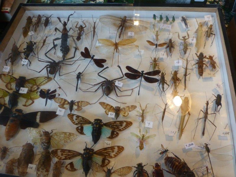 Expositionn minéraux fossiles insectes  Bourse11