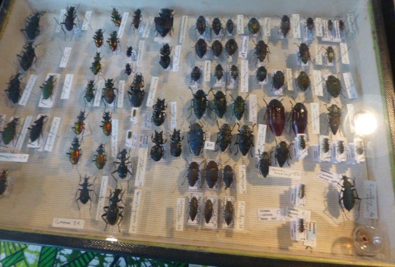 Exposition minéraux fossiles insectes  Bourse13