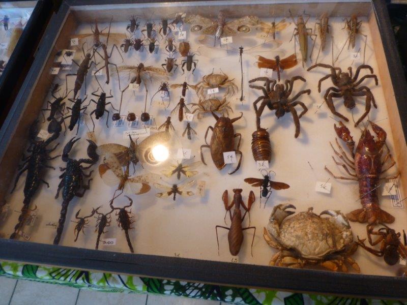 Exposition minéraux fossiles insectes  Bourse14