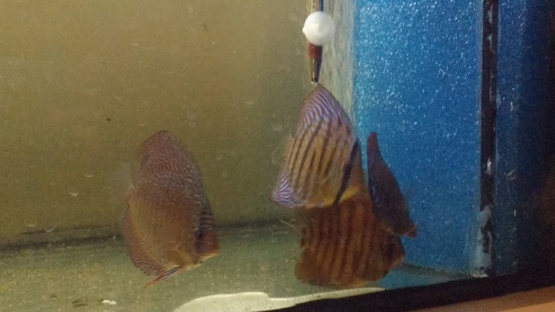[Herpo] 590L discus/altispinosa ! - Page 2 Img_2020
