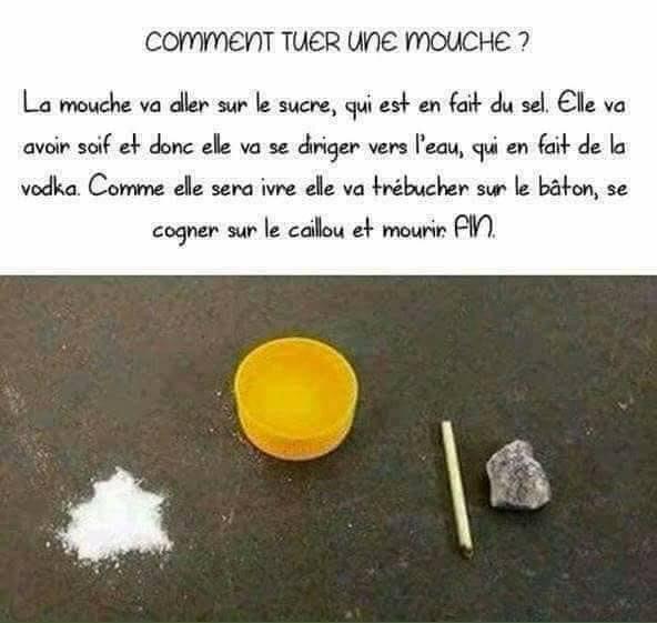 Humour en image ! - Page 19 Mouche10