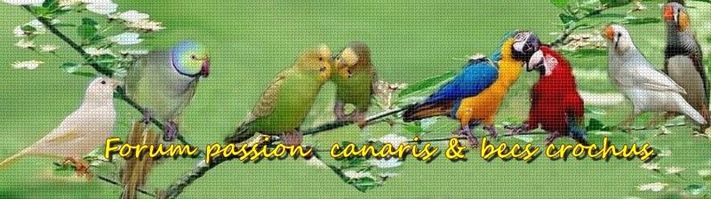 Forum  Passion  canaris et   becs crochus