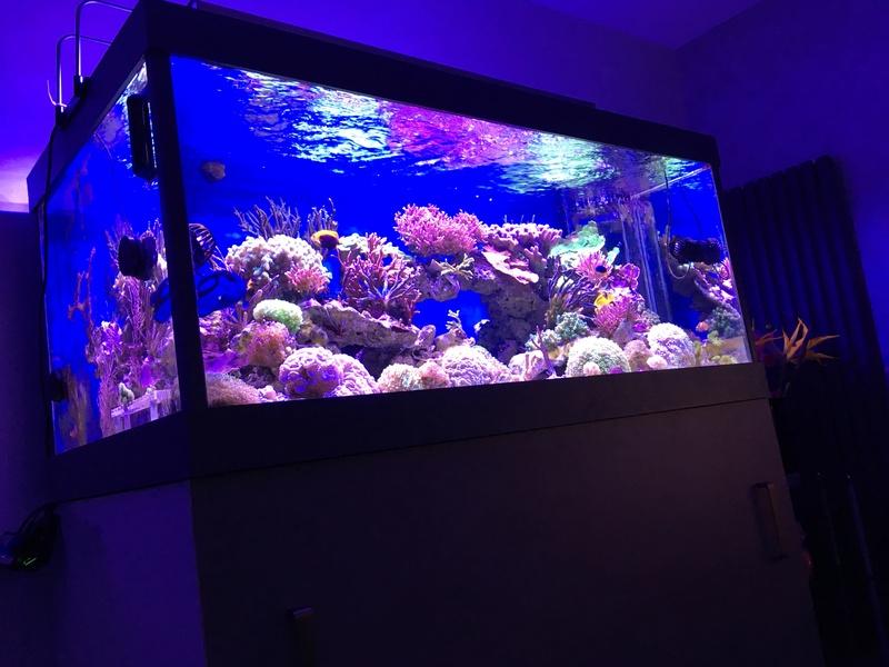 Mon nouveau reef 600 L Img_0610