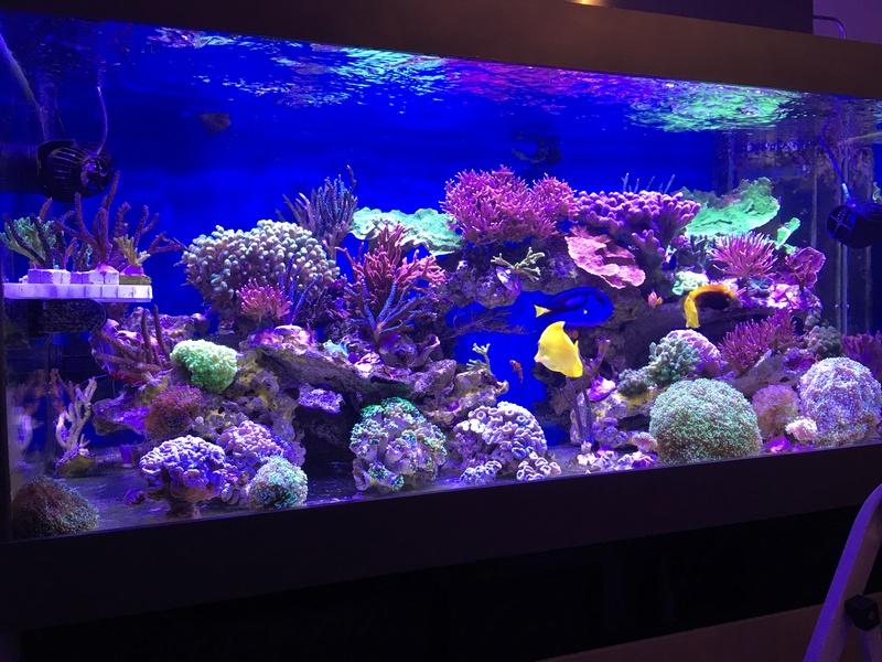 Mon nouveau reef 600 L Img_0710
