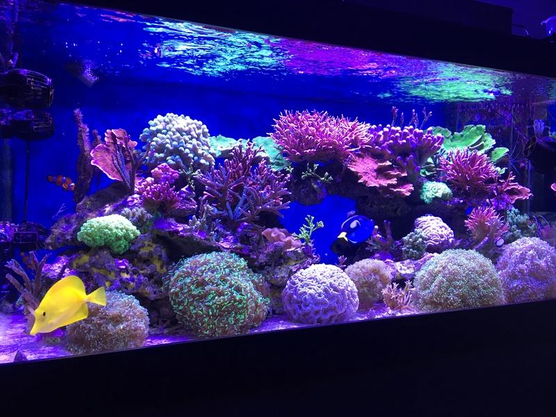 Mon nouveau reef 600 L Img_1310